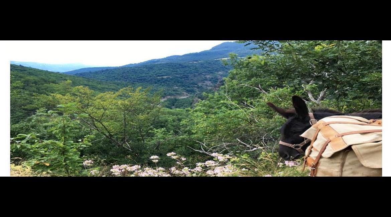 ITINÉRANCE : Le chemin de Stevenson GR® 70 avec un âne