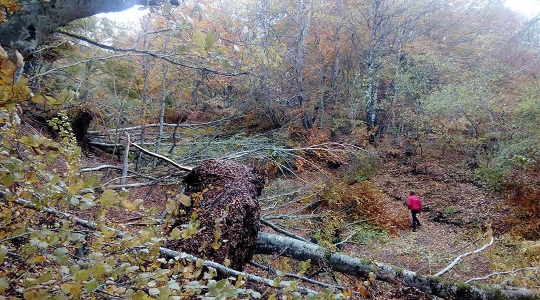 PUY DE DÔME : Des sentiers rendus dangereux après les fortes chutes de neige