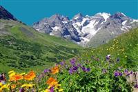 Des fleurs de montagne à découvrir en randonnée